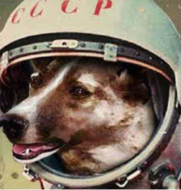 Laika Soviet Space Dog